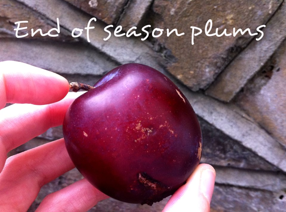end of season plum
